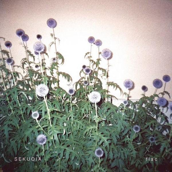 sekuoia-flac